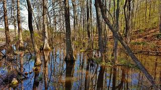 Patuxent River Cypress Swamp