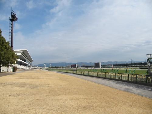 京都競馬場の芝生