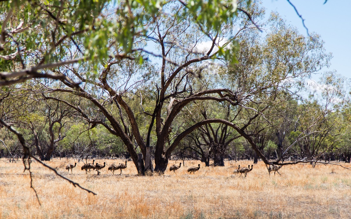 outback White Cliffs Wilcannia