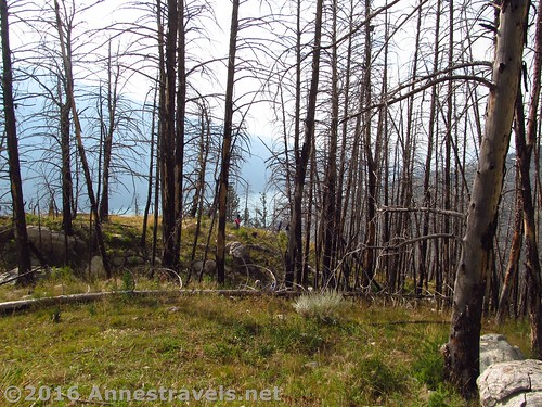 The burned out forest on the slopes of White Rock, Wind River Range, Wyoming
