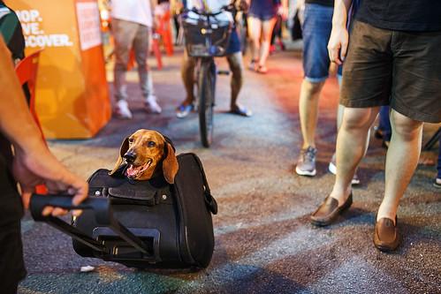 Doggy bag - Melaka, Malaysia