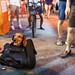 Doggy bag - Melaka, Malaysia by Maciej Dakowicz