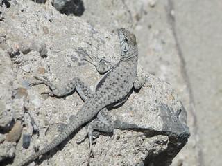 Fauna en Atacama Costero