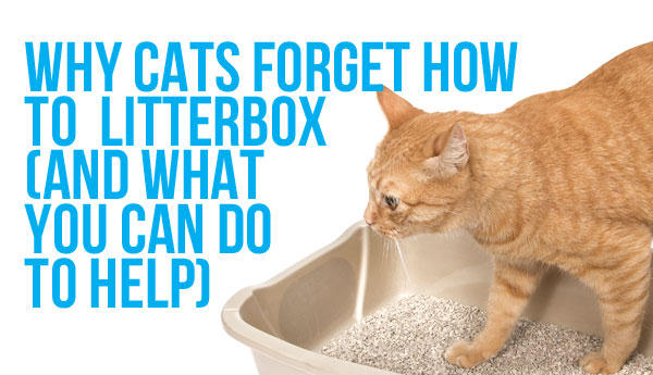 cats-forget-how-to-litterbox