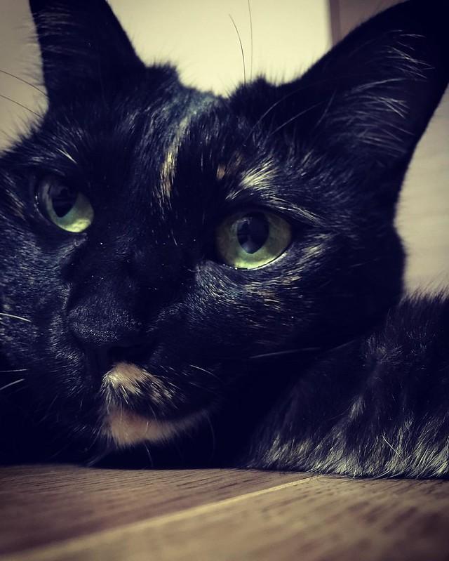 ぼんやり😐😐😐 #cat #cats #catsofinstagram #catstagram #instacat #instagramcats #neko #nekostagram #猫 #ねこ #ネコ# #ネコ部 #猫部 #ぬこ #にゃんこ #ふわもこ部