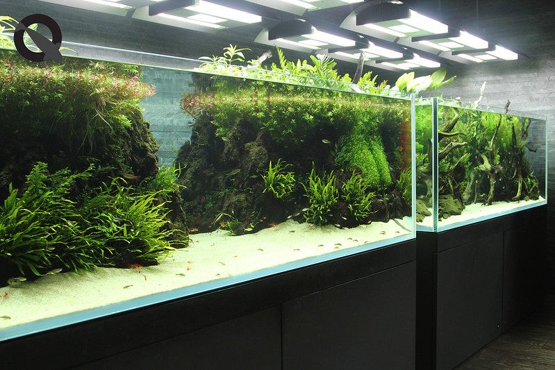 KQ Sumida Aquascape 7