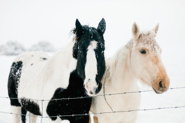 Snow-Ponies-Tone-8
