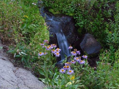 Waterfalls and wildflowers along the trail to Bonneville Pass, Shoshone National Forest, Wyoming