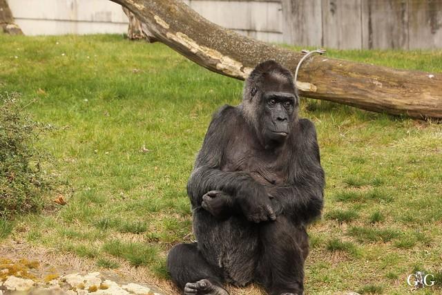 Frühlingstag im Zoo Berlin 03.04.201646
