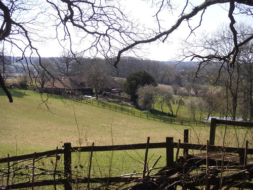 View out of Burgess Copse