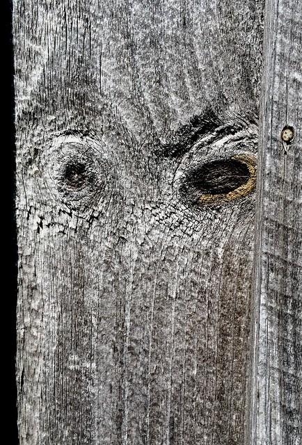 board owl2