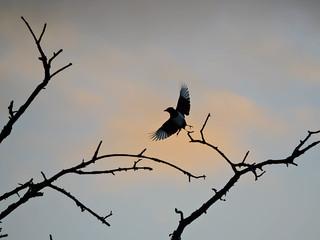 Take off...