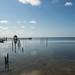 Golfo por heldraug