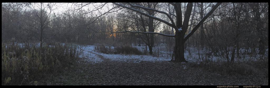 Park trees Pano_02-01 -2K_0000