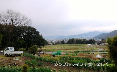 修学院離宮、通路横の畑