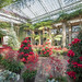 Christmas at Longwood Gardens by linden.g