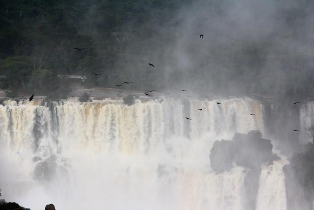Urubus na Cataratas do Iguacu - Foz do Iguacu / Brasil