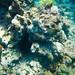 Sea Urchin, Jamaica