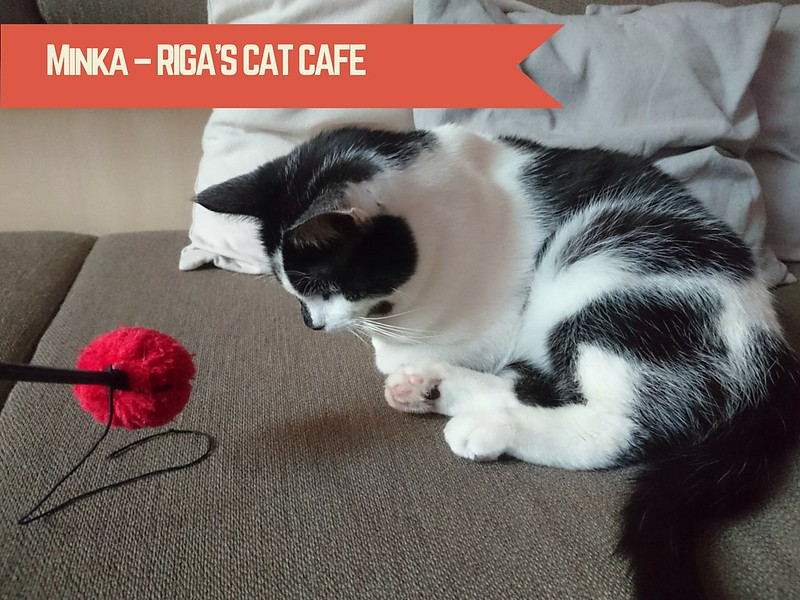 Minka – Riga's Cat Cafe