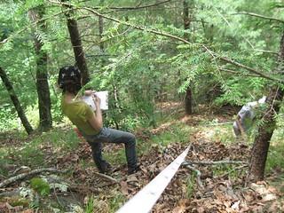 Blue Ridge Acidic Shale Slope Woodland