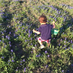 First trip to the bluebonnet fields #easter #bambinoshow