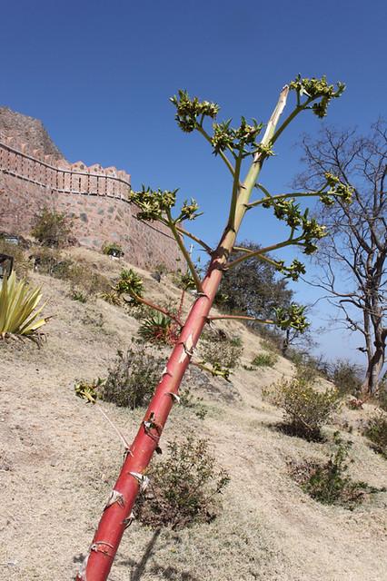 20130221_1570-Kumbalgarh-fort_resize
