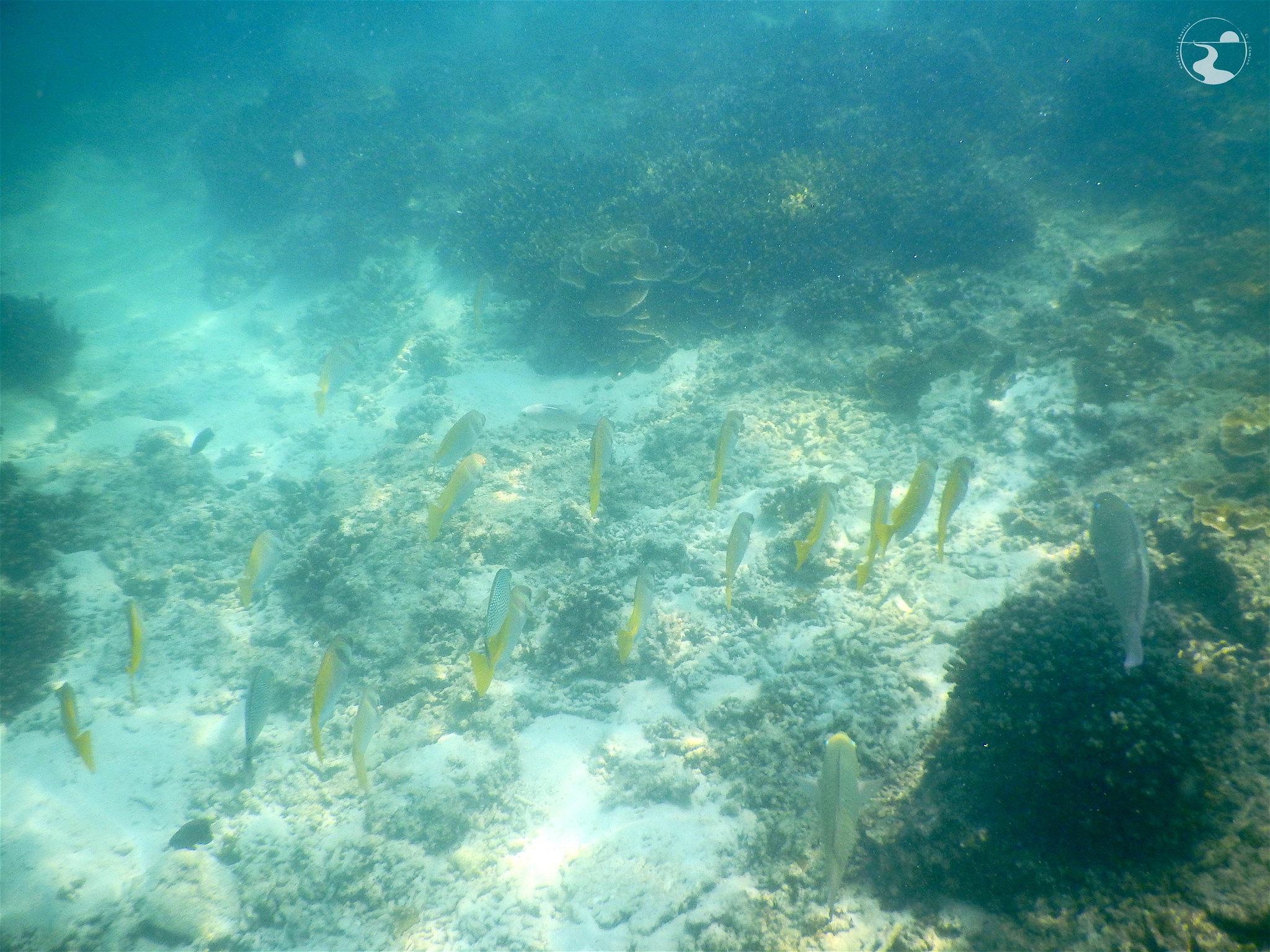 Snorkel en Ang Thong
