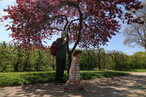Schoenbrunn: under the cherry tree