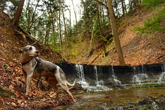 Juneau in Hell Hollow, Lake Metroparks, Ohio