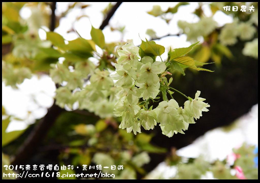 2015東京賞櫻自由行‧荒川線一日遊DSC_4449