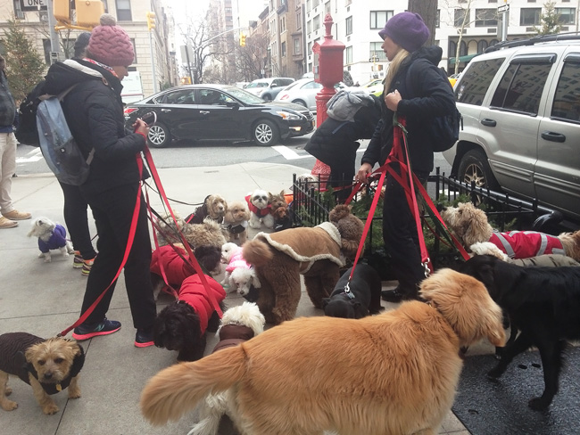 Dogs galore, on 80th Street