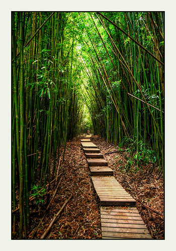 hawaii us unitedstates maui bamboo boardwalk pipiwaitrail hikingtrail bambooforest martinsmith haleakalānationalpark hāna nikond750 ©martinsmith
