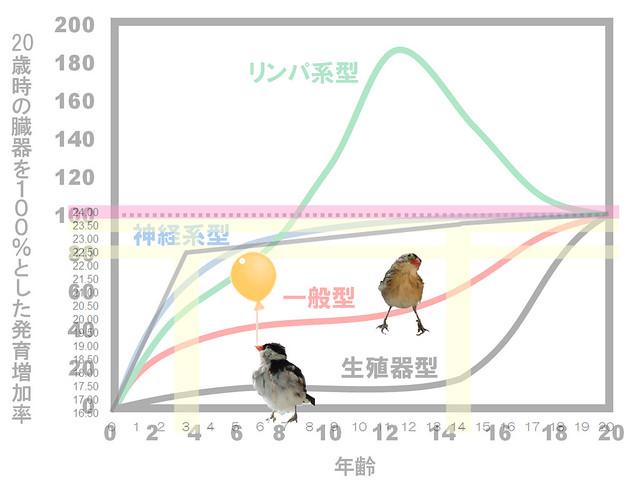 スキャモンの成長曲線(scammon's growth curve)と眼球成長グラフ合成|真・視力回復法|視力回復コア・ポータル