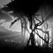 Tree Rays by Tom Hilton