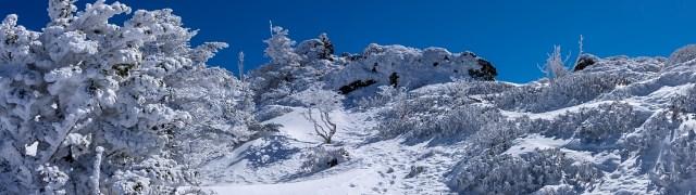 森林限界付近・・・綺麗な霧氷(樹氷)地帯を通り山頂へ向かう