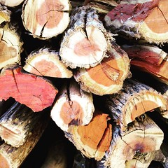 Ridiculously photogenic logs #stilllife #photographs #photography #iphone #mobilephotography