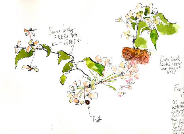 Sketchbook #94: Blooming Trees