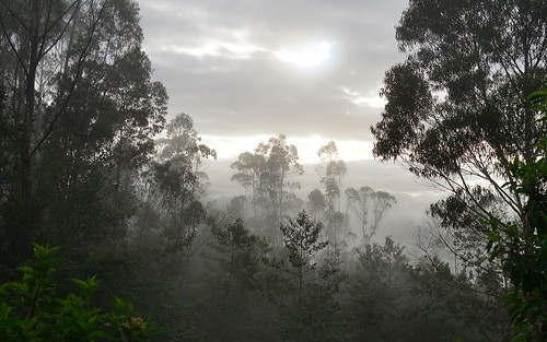 desktop mist peru southamerica clouds forest landscape levanto featured northernandes chachapoyasdistrict
