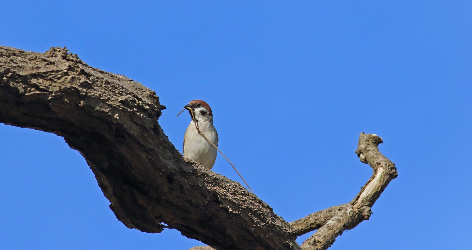 sparrowsetc0090