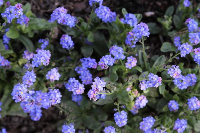 purple tinies