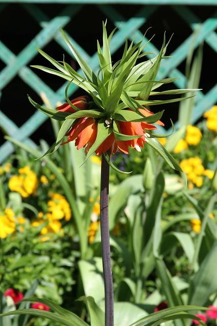 orange spiky flower ball