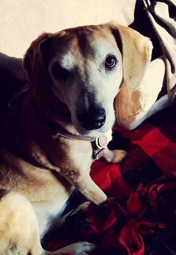 Rescued Senior Hound Mix Loves her Sunspots - Lapdog Creations