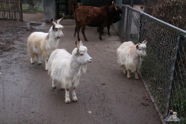 Tierpark Hagenbeck 02.01.2015   118