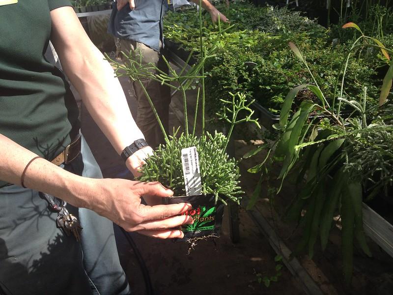 Lowline Plants
