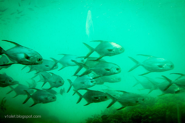 Pulau Putri Ikan11-2393rw