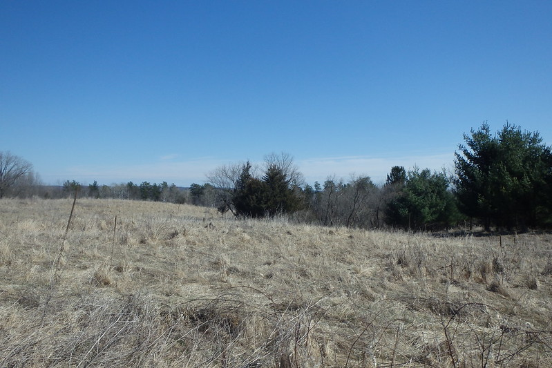bright blue sky at the top half, light brown grasses at the bottom half, scattered leafless and pine trees at the intersection of land and sky