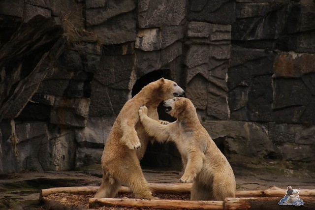 Tierpark Berlin 13.03.2016  055