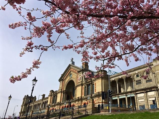 Cherry Blossom Alexandra Palace 2016