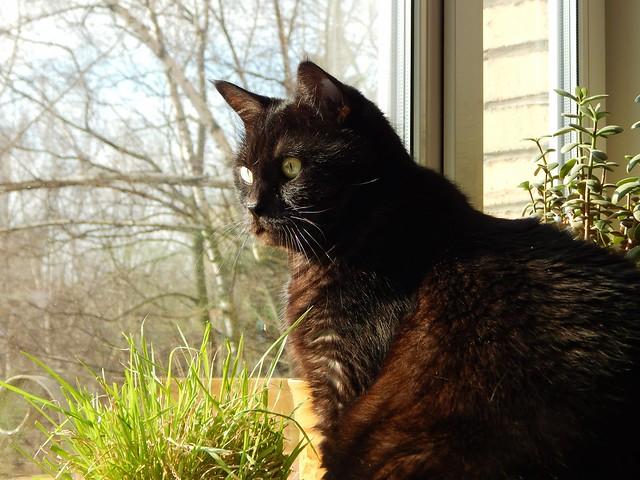 чёрный кот Муся | Хорошо.Громко.