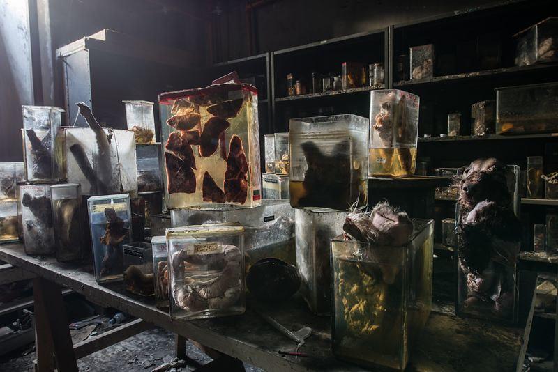 驚魂比利時「廢棄獸醫學院」福馬林的怪誕美學14